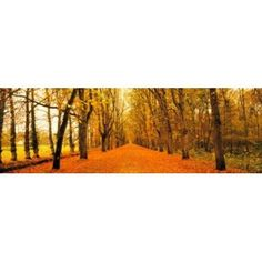 Tree-lined road Loire Chenonceaux France Canvas Art - Panoramic Images (36 x 12)