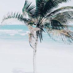tropical ocean breezes #palmtree #seaside #beach via @smaysdays