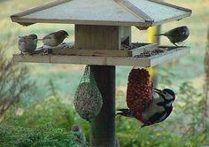 Vogeltjes In De Winter | Smulweb.nl