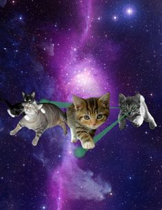 Cats in the galaxy