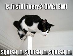 Oh My Freaking Stars!: Squish it!