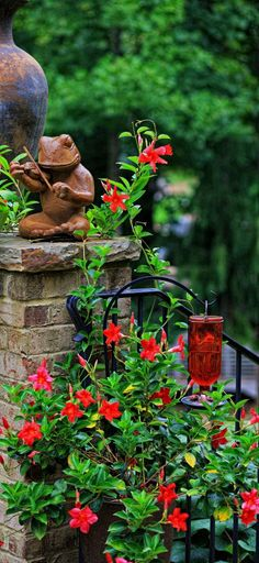 Plant a Mandevilla around a hummingbird feeder, the large red blossoms attract butterflies and hummingbirds all summer.