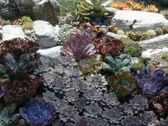 Succulent bed - detail | Flickr - Photo Sharing!