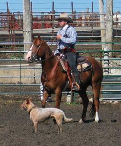 Cowboy and a herding dog (heeler)