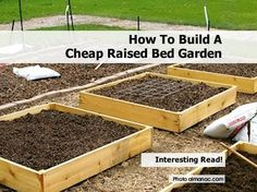 raised bed gardening allows you to maintain a healthy vegetable garden ...