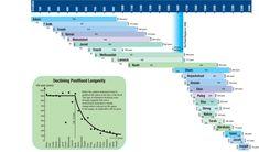 Cuadro genealógico con edades basado en la interpretación literal del Génesis. En esta versión el diluvio ocurre unos 2242 años luego de Adán. Notar como la edad comienza a disminuir luego del diluvio. www.creationscience.com. Figura más grande acá.