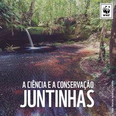 WWF-Brasil (@WWF_Brasil)   Twitter