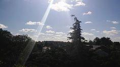 CASTELAR. Vista del cielo y de árboles desde mi terraza...