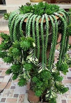 24 beauty cactus and succulent garden ideas for indoor 21 - Kaktus - Succulent Gardening, Cacti And Succulents, Planting Succulents, Cactus Plants, Garden Plants, Planting Flowers, House Plants, Propagate Succulents, Organic Gardening