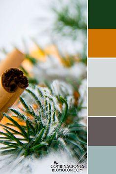 combinacion de colores variedad de temporada 4