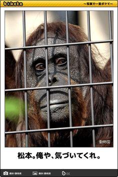 松本。俺や、気づいてくれ。 Chimpanzee, I Don T Know, Laughter, Cool Photos, Chill, Comedy, Funny Pictures, Jokes, Japanese