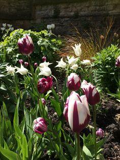 Spring bulbs Little Acorns, Spring Bulbs, Planting, Garden Design, Ideas, Plants, Landscape Designs, Thoughts, Yard Design