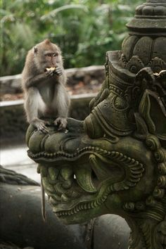 Undaunted. Meet some cheeky monkeys at a Bali Yoga Teacher Training with Zuna…