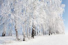16 фотографий, доказывающих, что зима — это шедевр. Обсуждение на LiveInternet - Российский Сервис Онлайн-Дневников
