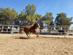 JP, one of the horses at the ranch I'm working with