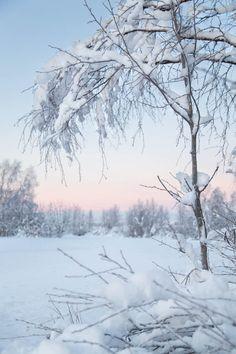 Luminen kaamosmaisema Muoniossa Winter Snow, Winter Time, Winter Christmas, Winter Pictures, Winter Beauty, White Aesthetic, Nature Quotes, Winter Scenes, Great View