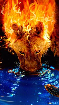"""Lion of Judah / trumps the adversary /Peter calls him the """"adversary"""" and he admonished the Church to be watchful: """"Be self-controlled and alert. Your enemy the devil prowls around like a roaring lion looking for someone to devour"""" 1 Peter Anim Gif, Animiertes Gif, Animation, Fire Lion, Big Cats Art, Flame Art, Lion Wallpaper, Amazing Gifs, Prophetic Art"""