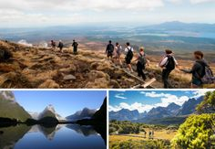 Looking to complete a hike in New Zealand? Six reasons to ditch the compass and go guided