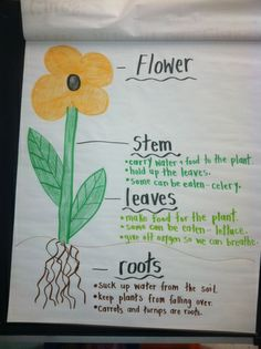 Flower anchor chart