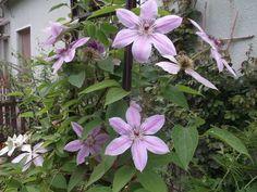 Garden Plants, Flowers, Royal Icing Flowers, Flower, Florals, Floral, Blossoms