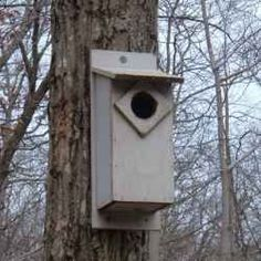 DIY Birdhouse Plans: Build A Screech Owl Nest Box    The screech owl is a year round resident in nearly every state across the county. They primarily...