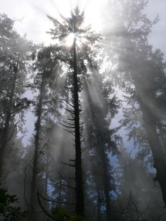 Crepuscular rays: Dramatic columns of sunlight radiate from the sky