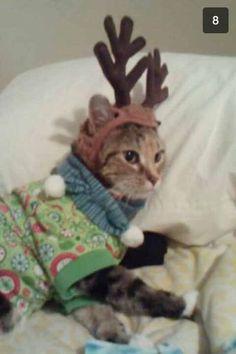 Delilah.  She's the cat's pajamas. Christmas 2013