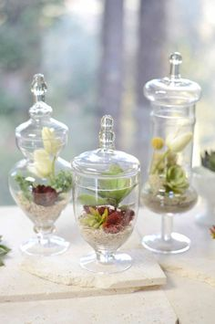 """Set of 3 Small Apothecary Jar 9, 12 & 13.5"""" tall....    I like the idea of using plants instead of candy, who really eats all those candies anyways??"""