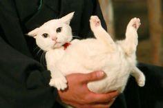 The Ultimate Cat Care Guide! Funny Cat Photos, Funny Cats, Crazy Cat Lady, Crazy Cats, Neko, Soft Kitty Warm Kitty, Kitty Kitty, Samurai, Cat Behavior