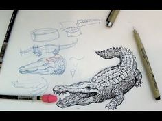 How to draw a crocodile or alligator