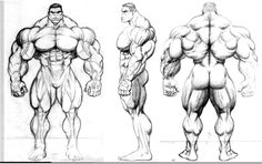 hulk poster or comic book cov by JIM-SWEET on DeviantArt Anatomy Sketches, Body Sketches, Anatomy Drawing, Anatomy Art, Drawing Sketches, Drawings, Human Anatomy, Human Figure Drawing, Figure Sketching