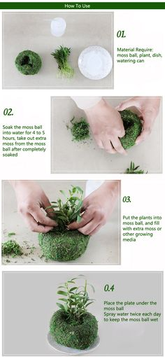Soilless Culture Dry Moss Planting Ball Garden Plant Potted Hydrating Flowerpot