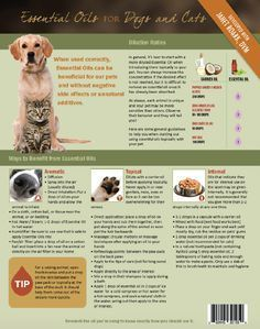 Essential Oils For Dogs And Cats Fido & Felix Tear Pad Learn how to support your pets so they can live a healthly lifestyle! You use essential oil to help support your body. Shouldn't you do the sam