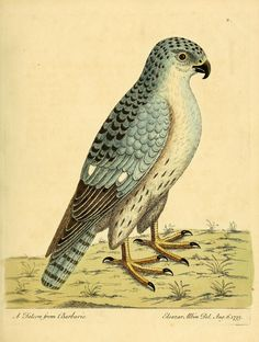v. 3 - A natural history of birds : - Biodiversity Heritage Library         [1731-1738]