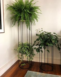 Home Decorating Tips On A Budget Indoor Garden, Indoor Plants, Garden Bed, Decoration Plante, House Plants Decor, Snake Plant, Hanging Plants, Flower Pots, Planting Flowers