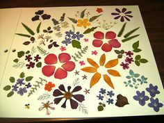 #81 Real Dried Pressed Flowers & Leaves a rainbow of color for crafting   eBay