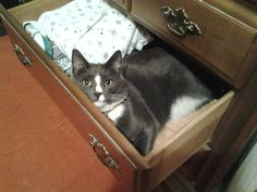 Dusty Loves to Hang Out in the Oddest Places! » Dusty Duder » photo by cure_kitty