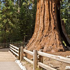 Sequoia and Kings Canyon wow spots | Sequoia: Giant Forest