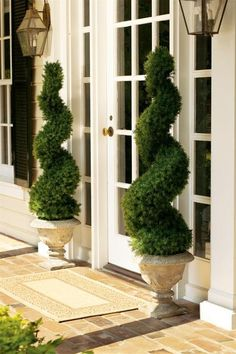 Spiral Alberta Spruce Topiaries in Urns - they add color to the front entryway and they're perfect all year round - via lamb & blonde: My Dream Garden