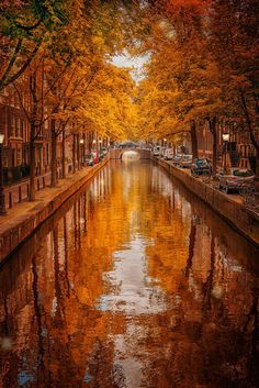 #Autumn in Amsterdam, The Netherlands. This is like a beautiful painting! #travel