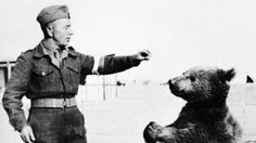 Kraków będzie miał pomnik niedźwiedzia Wojtka z Armii Andersa