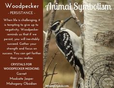 Animal Medicine: Woodpecker by Lizzy Baxter - Current Updates - Information About Crystals As A Healing Tool Animal Totem Meanings, Animal Symbolism, Spirit Animal Totem, Animal Spirit Guides, Spirit Meaning, Spiritual Animal, Animal Medicine, Power Animal, Animal Quotes