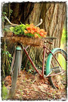 Ημερολόγιο Κήπου: Απρίλιος | Woody's Ξύλινες Χειροποίητες Κατασκευές & Διακόσμηση Κήπου