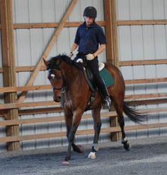 Check this site out if you are looking for some online and downloadable lessons! Great for dressage/jumping career, even pleasure horse. Turn on the forehand, transitions, leg yielding..