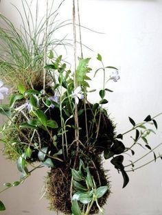 Como hacer un jardín colgante Kokedama