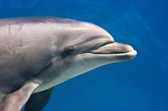 Het was opwindend nieuws vorige week: dolfijnen zouden woorden en zinnen gebruiken. Maar andere wetenschappers trekken die gepubliceerde conclusies in twijfel.