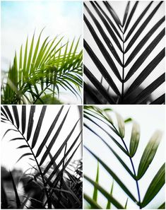 Looking for a fun classy way to bring some summer foliage into your space without the responsibility of watering and pruning? Look no further- I've got ya covered with this series of FREE Palm Printables! Palm Tree Leaves, Palm Trees, Plant Leaves, Used Cardboard Boxes, Summer Photos, Holiday Lights, Printable Wall Art, Free Printable, Coastal Decor