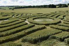 inside the crop circle