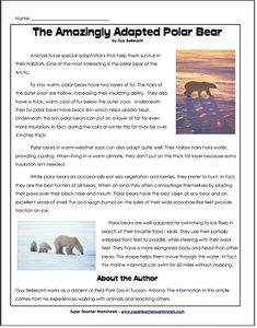 43 Best Reading And Writing Super Teacher Worksheets Images On Reading Comprehension WS Polar Bear Article Polar Bear Adaptationsbaby Polar Bearsreading Comprehension Worksheetsteacher