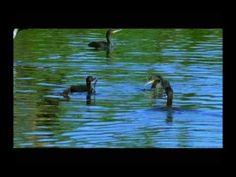The Cormorants (4 of 4)